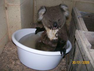 Hurrah craft Koala two