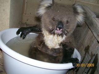 Hurrah craft Koala three