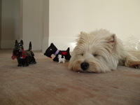 Hurrah_craft_mtilda_scotty_dogs_4